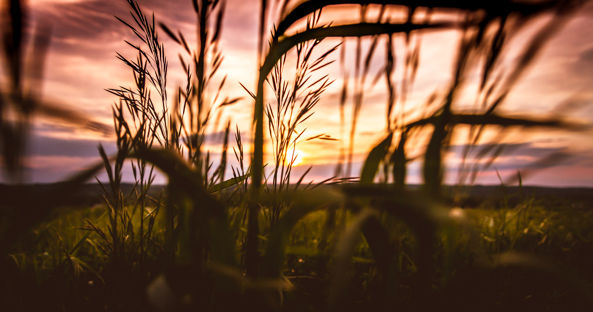 Sunset through grass photo courtesy of Peter Marcelli