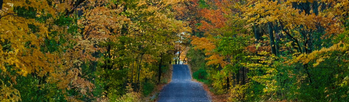 Country Road with autum leaves courtesy of Adam Armitage